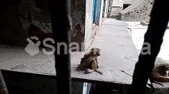 Alley, Alleyway, Animal, Apparel, Baboon, Bird, Building, City, Clothing, Coat, Dove, Dungeon, Elephant, Face, Finch, Home Decor, Human, Mammal, Monkey, Overcoat, Person, Pet, Pigeon, Prison, Road, Slum, Street, Town, Undershirt, Urban, Wildlife, Zoo