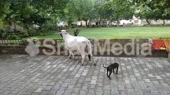 Andalusian Horse, Animal, Antelope, Apparel, Arbour, Art, Beak, Bird, Bull, Canine, Cat, Cattle, Clothing, Cow, Dog, Flagstone, Garden, Goat, Grass, Horse, Hound, Longhorn, Mammal, Outdoors, Ox, Path