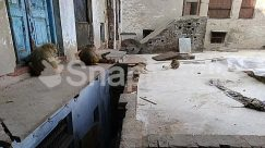 Alley, Alleyway, Animal, Apparel, Archaeology, Architecture, Banister, Bear, Bird, Brick, Building, Bunker, Cat, City, Clothing, Concrete, Flagstone, Floor, Flooring, Furniture, Handrail, Housing