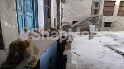 Alley, Alleyway, Animal, Apparel, Architecture, Bear, Bench, Bird, Building, Canine, Cat, City, Clothing, Demolition, Dog, Flagstone, Furniture, Housing, Human, Mammal, Neighborhood, Pants, Person, Pet, Road, Ruins, Slum, Street, Town, Urban, Wildlife, Wood