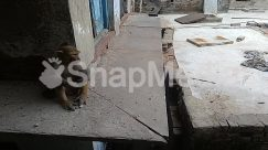 Animal, Apparel, Architecture, Baboon, Bear, Building, Canine, Cat, City, Clothing, Concrete, Dog, Flagstone, Mammal, Monkey, Path, Pavement, Pet, Road, Sidewalk, Slate, Street, Town, Urban, Walkway, Wildlife