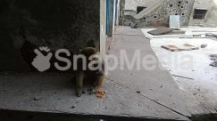 Abyssinian, Alley, Alleyway, Animal, Apparel, Art, Baboon, Banister, Brick, Building, Canine, Cat, City, Clothing, Concrete, Dog, Flagstone, Floor, Flooring, Furniture, Handrail, Housing, Human, Indoors, Mammal, Monkey, Path, Pavement, Pedestrian