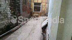 Alley, Alleyway, Animal, Apparel, Boar, Brick, Building, Bunny, Canine, Cat, City, Clothing, Concrete, Corridor, Ditch, Dog, Door, Flagstone, Floor, Hog, Home Decor, Housing, Mammal, Path, Pavement, Pet, Pig, Plywood, Rabbit, Road, Rodent