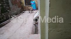 Alley, Alleyway, Animal, Apparel, Brick, Building, Canine, City, Clothing, Coat, Corridor, Ditch, Dog, Flagstone, Goat, High Rise, Hog, Human