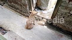 Abyssinian, Alley, Alleyway, Animal, Art, Bear, Bird, Brick, Building, Bunny, Canine, Cat, City, Concrete, Cougar, Deer, Dog, Female, Flagstone, Goat, Kangaroo, Lynx, Mammal, Nature, Neighborhood, Outdoors, Path, Pavement, Pet, Puddle, Rabbit, River, Road, Rock, Rodent, Sculpture, Sidewalk, Slate, Soil, Statue, Street, Town, Urban, Walkway, Wallaby, Water, Wildlife, Zoo