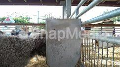 Animal, Cattle, Gate, Human, Mammal, Person, Pipeline, Railing, Sheep, Zoo
