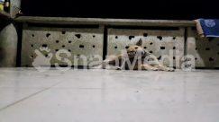Animal, Banister, Bear, Canine, Concrete, Den, Dog, Flagstone, Floor, Flooring, Fox, Furniture, German Shepherd, Handrail, Hardwood, Hound, Mammal, Pet, Plywood, Pointer, Porch, Strap, Wildlife