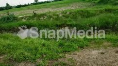 Bog, Building, Countryside, Ditch, Farm, Field, Grass, Grassland, Ground, Housing, Land, Marsh, Meadow, Nature, Ocean, Outdoors, Pasture, Plant