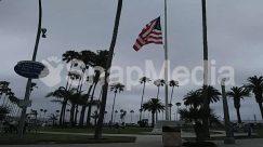 American Flag, Arecaceae, Automobile, Bicycle, Bike, Car, Flag, Human, Machine, Palm Tree, Person, Plant, Symbol, Transportation, Tree