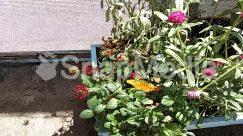 Acanthaceae, Asteraceae, Blossom, Brick, Flower, Flower Arrangement, Flower Bouquet, Garden, Gardening, Geranium, Grass, Herbal, Herbs, Human, Jar, Leaf, Nature, Outdoors, Peony, Person, Petal