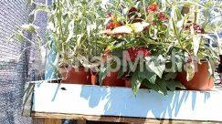 Anthurium, Blossom, Flower, Flower Arrangement, Flower Bouquet, Garden, Geranium, Herbs, Human, Jar, Outdoors, Person, Plant, Planter, Potted Plant, Pottery, Vase