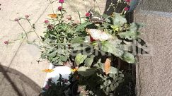 Acanthaceae, Amaranthaceae, Animal, Aster, Asteraceae, Backyard, Blossom, Brick, Bush, Cactus, Cushion, Daisies, Daisy, Face, Flower, Flower Arrangement, Flower Bouquet, Furniture, Geranium, Grass, Green, Herbal, Herbs, Jar, Lawn, Leaf, Nature, Outdoors, Petal