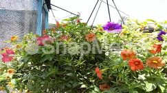 Anther, Asteraceae, Blossom, Dahlia, Daisies, Daisy, Flower, Flower Arrangement, Flower Bouquet, Garden, Geranium, Herbal, Herbs, Hibiscus, Jar, Leaf, Nature, Outdoors, Peony, Petal