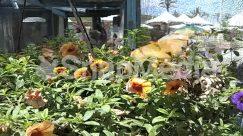 Acanthaceae, Animal, Arbour, Aster, Asteraceae, Backyard, Bird, Blossom, Brick, Building, Bush, City, Countryside, Dahlia, Daisies, Daisy, Flower, Flower Arrangement, Garden, Gardening, Geranium, Greenhouse, Herbal