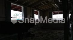Animal, Architecture, Attic, Building, Calf, Cattle, Cow, Dairy Cow, Housing, Indoors, Living Room, Loft, Mammal, Room, Skylight, Window