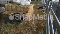Agriculture, Animal, Bull, Cattle, Countryside, Field, Goat, Hay, Horse, Human, Mammal, Nature, Ocean, Outdoors, Person, Sea, Sheep, Straw
