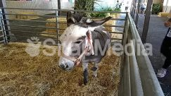 Animal, Countryside, Donkey, Hay, Horse, Human, Mammal, Nature, Outdoors, Person, Railing, Straw, Zoo