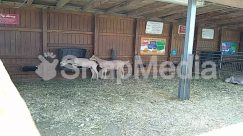 Animal, Antelope, Backyard, Barn, Building, Bus Stop, Canine, Chair, Cottage, Countryside, Deer, Den, Dog, Dog House, Farm, Furniture, Grass, Horse, House, Housing, Hut, Indoors, Kennel, Living Room, Mammal, Nature