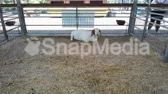 Animal, Bird, Building, Bunny, Cattle, Countryside, Cow, Den, Dog House, Farm, Fowl, Goat, Hare, Hay, Horse, Human, Kennel, Mammal, Nature, Outdoors