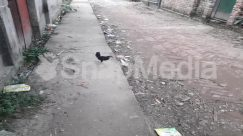Alley, Alleyway, Animal, Apparel, Asphalt, Bird, Building, Chicken, City, Clothing, Cobblestone, Concrete, Flagstone, Fowl, Ground, Hen, Land, Nature, Neighborhood, Outdoors, Path, Pavement, Pigeon, Plant, Pollution, Poultry, Puddle, Rainforest, Road