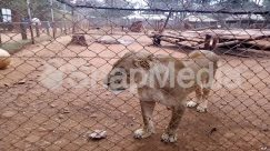 Animal, Canine, Cattle, Cougar, Cow, Dog, Horse, Human, Mammal, Person, Pet, Sheep, Wildlife, Zoo