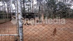 Animal, Canine, Cat, Cougar, Dog, Fence, Gate, Giraffe, Ground, Lion, Mammal, Nature, Outdoors, Pet, Soil, Tiger, Wildlife, Yard, Zoo