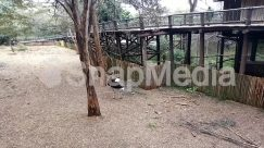 Animal, Bird, Boardwalk, Bridge, Building, Bush, Cottage, Countryside, Dock, Emu, Forest, Garden, Grass, Ground, Grove, House, Housing, Human, Jungle, Land, Lawn, Nature, Outdoors