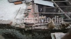 Animal, Bird, Brick, Building, Chicken, Flagstone, Fowl, Hen, Human, Mammal, Nature, Person, Poultry, Roof, Tiger, Urban, Vulture, Wildlife, Wood