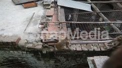 Animal, Baboon, Bear, Bird, Brick, Cat, Chicken, Demolition, Flagstone, Fowl, Human, Mammal, Monkey, Nature, Person, Pet, Poultry, Rock, Roof, Slate, Urban, Vulture, Wildlife, Wood, Zoo