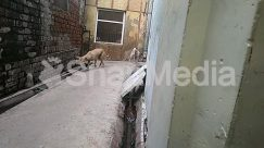 Alley, Alleyway, Animal, Brick, Building, Canine, City, Concrete, Corridor, Dog, Door, Elephant, Flagstone, Goat, High Rise, Hog, Home Decor, Human, Mammal, Neighborhood, Path, Pavement, Person, Pet, Pig, Plywood, Road