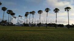 Arecaceae, Automobile, Building, Car, Field, Golf Course, Grass, House, Housing, Lawn, Nature, Outdoors, Palm Tree, Park, Plant