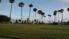 Arecaceae, Building, City, Field, Golf Course, Grass, Lawn, Outdoors, Palm Tree, Park, Path, Pavement, Plant, Sidewalk, Sphere, Summer, Town, Transportation, Tree, Urban