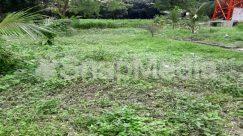Abies, Arbour, Backyard, Building, Bush, Chair, Countryside, Farm, Field, Fir, Forest, Furniture, Garden, Gardening, Grass, Grassland, Grazing, Ground, Grove, Herbs, Housing, Jar