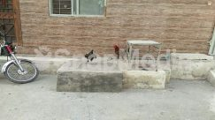 Animal, Bicycle, Bike, Bird, Brick, Chicken, Cock Bird, Flagstone, Fowl, Hen, Home Decor, Machine, Motorcycle, Path, Patio, Pet, Poultry
