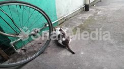 Alloy Wheel, Animal, Asphalt, Bicycle, Bike, Canine, Car Wheel, Cat, Dog, Machine, Mammal, Path, Pet, Spoke, Tarmac, Tire, Transportation, Vehicle, Walkway, Wheel