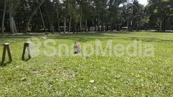 Animal, Apparel, Bench, Bird, Bunny, Canine, Clothing, Countryside, Deer, Dog, Field, Forest, Fox, Furniture, Garden, Grass, Grassland, Green, Ground, Grove, Human, Land, Lawn, Mammal