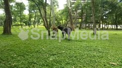 Andalusian Horse, Animal, Canine, Chair, Colt Horse, Conifer, Countryside, Dog, Farm, Field, Foal, Forest, Furniture, Grass, Grassland, Grazing, Green