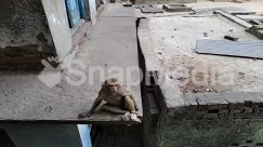 Animal, Banister, Brick, Building, Bunker, Concrete, Corridor, Gravel, House Building, Housing, Human, Monkey, Nature, Sun Light, Terrace