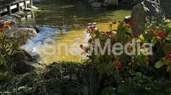 Animal, Art, Bird, Blossom, Bog, Building, Cottage, Flower, Forest, Garden, Grass, Green, Grove, House, Housing, Jar, Jungle, Lagoon, Lake, Land, Landscape, Leaf, Lily, Marsh, Nature, Outdoors, Plant