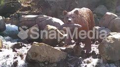 Animal, Arctic Fox, Bear, Black Bear, Brown Bear, Canine, Cougar, Coyote, Fox, Human, Hunting, Mammal, Nature, Outdoors, Person, Pig, Polar Bear, Red Wolf, Rock, Soil, Wilderness, Wildlife, Wolf, Zoo