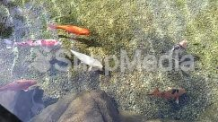 Angler, Animal, Aquatic, Art, Bird, Carp, Coho, Crawdad, Dirt Road, Fish, Fishing, Food, Goldfish, Gravel, Human, Koi, Leisure Activities, Nature, Outdoors, Person, Plant, Road, Rock, Sea Life, Seafood, Shrimp, Soil, Water