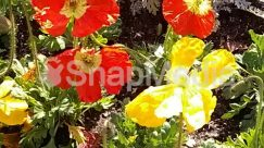 Anemone, Anther, Asteraceae, Blossom, Bud, Carnation, Daisies, Daisy, Flower, Geranium, Hibiscus, Outdoors, Petal, Plant, Pollen, Poppy, Sprout, Vegetation