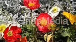 Anemone, Anther, Art, Asteraceae, Bazaar, Blossom, Building, Carnation, Cottage, Dahlia, Daisies, Daisy, Floral Design, Flower, Flower Arrangement, Flower Bouquet, Geranium, Graphics