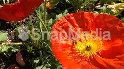 Anemone, Anther, Asteraceae, Blossom, Dahlia, Flower, Geranium, Iris, Jar, Petal, Plant, Pollen, Poppy, Pottery, Rose, Vase, Vegetation
