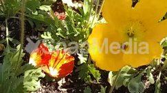Anemone, Animal, Anther, Apidae, Araceae, Asteraceae, Bee, Bird, Blossom, Bud, Bush, Daffodil, Dahlia, Flower, Geranium, Herbal, Herbs, Hibiscus, Honey Bee, Insect