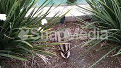 Wildlife,Waterfowl,Nature,Mallard,Duck,Bird