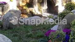Plant,Landscape,water fall