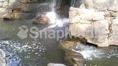 Animal, Cliff, Creek, Land, Nature, Outdoors, Path, Plant, Rainforest, River, Rock, Scenery, Shoreline, Slate, Stream, Tree, Vegetation, Water
