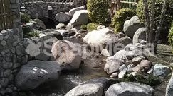 Rock,River,Rainforest,Pond,Plant,Path,Nature,Moss,Landscape,Jungle,Flagstone,Creek,Blossom