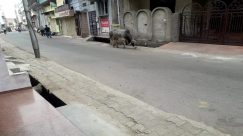 Alley, Alleyway, Animal, Apparel, Architecture, Asphalt, Bicycle, Bike, Bird, Buffalo, Building, Bull, Canine, Cattle, Chair, City, Clothing, Concrete, coronavirus, Countryside, COVID19, Cow, Curfew, Cyclist, Dog, Flagstone, Furniture, Helmet, Human, Intersection, isolation, lockdown, Machine, Mammal, Motor Scooter, Motorcycle, Nature, Neighborhood, Outdoors, Ox, Path, Pavement, Prevention, quarantine, Social distancing